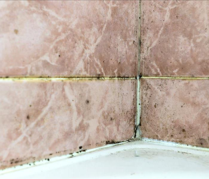 Black mold fungus growing in damp poorly ventilated bath areas. Mold tile joints with fungus due to condensation moisture